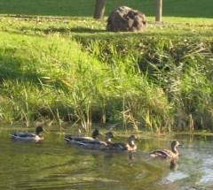 Duckssmall
