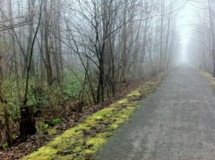 trail in fog small